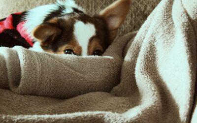 Hundetæpper giver din hund komfort og tryghed