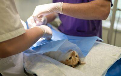 Herning dyrlæge – omsorg, tryghed og høj faglighed
